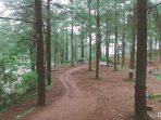 hutan pinus malino