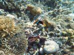terumbu karang di flores
